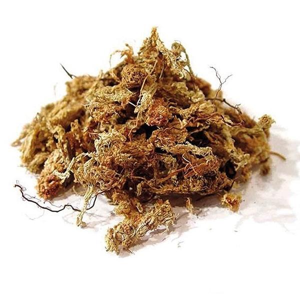 Rong lót chuồng Chile Moss 1kg