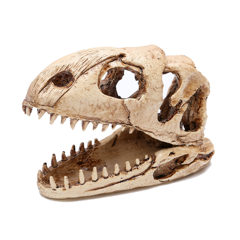 Sọ khủng long