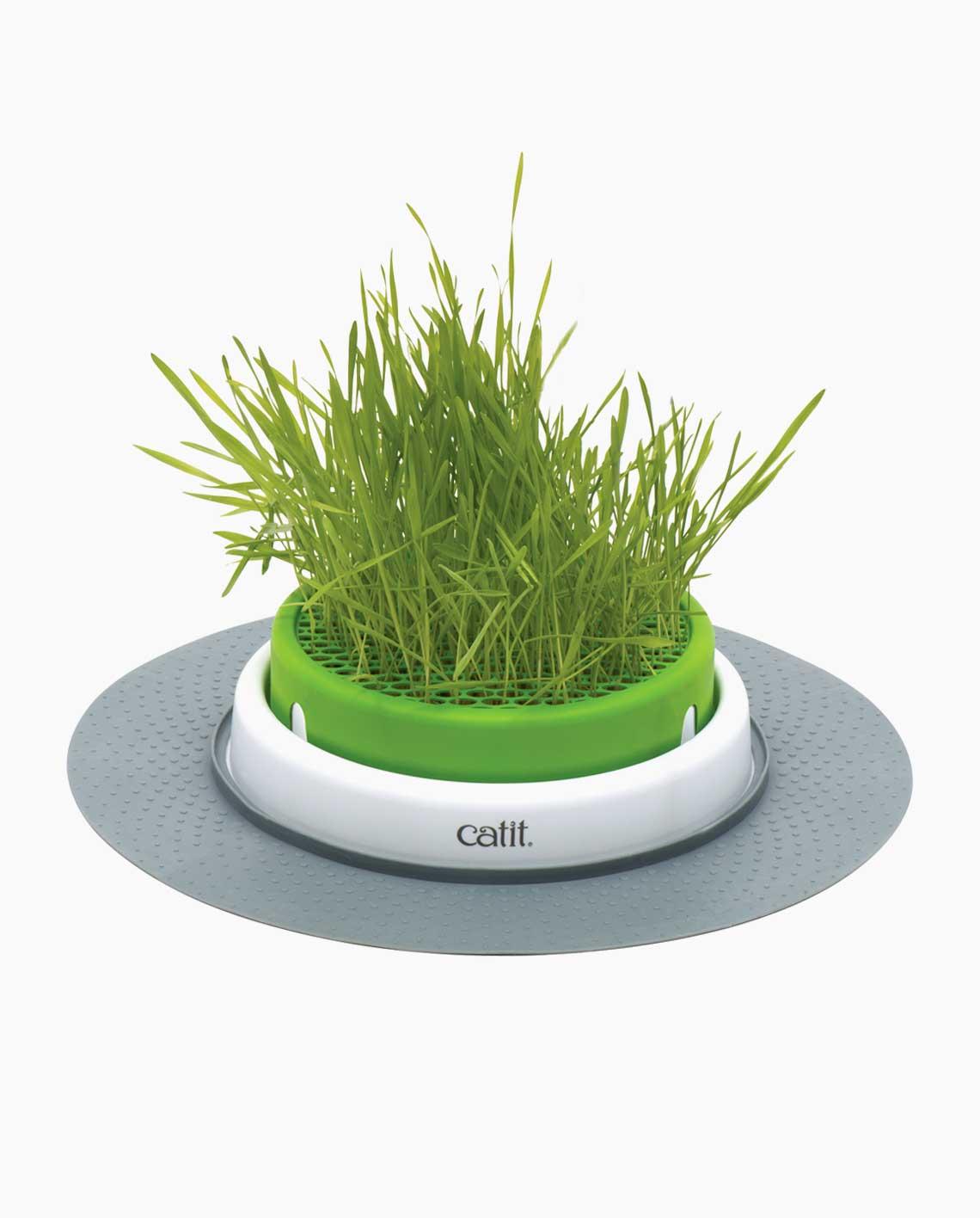 Khay trồng cỏ cho mèo