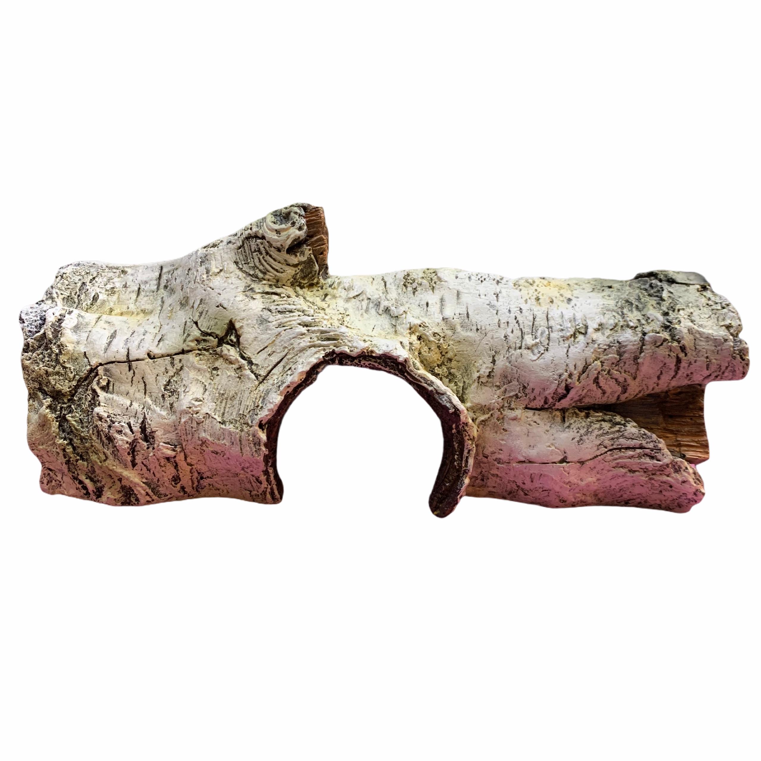 Hang thân bạch dương